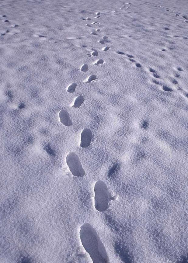 snow-h1