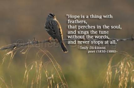 hope-8553